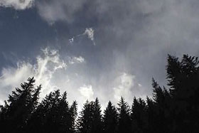 Clouds over alpine larch trees